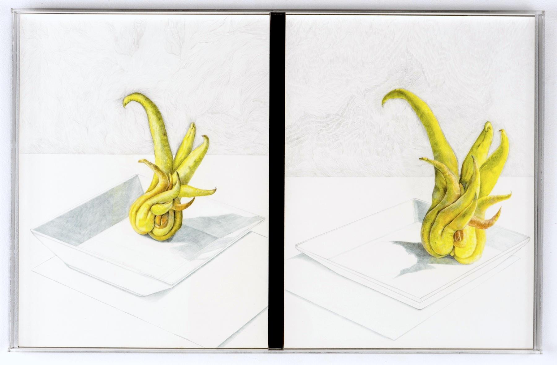 CONVERSION: PORTRAIT OF FLES. SELF  prismacolor pencil, graphite on clayboard in plexiglass frame  26in. X 48 in.
