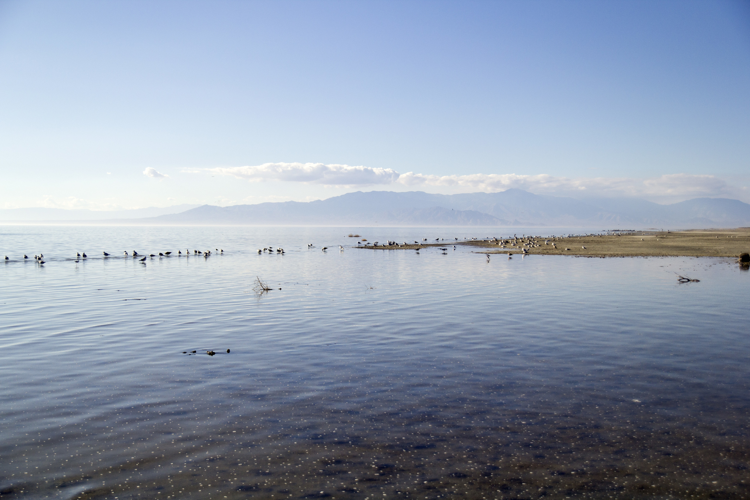 Salton Sea, California. There's just something about the creepiness of this place...