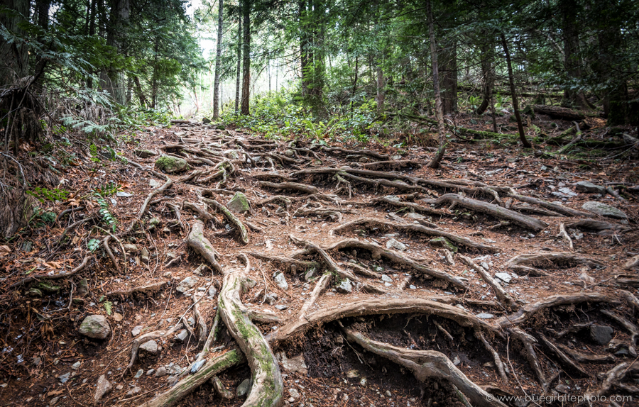 The root to the summit