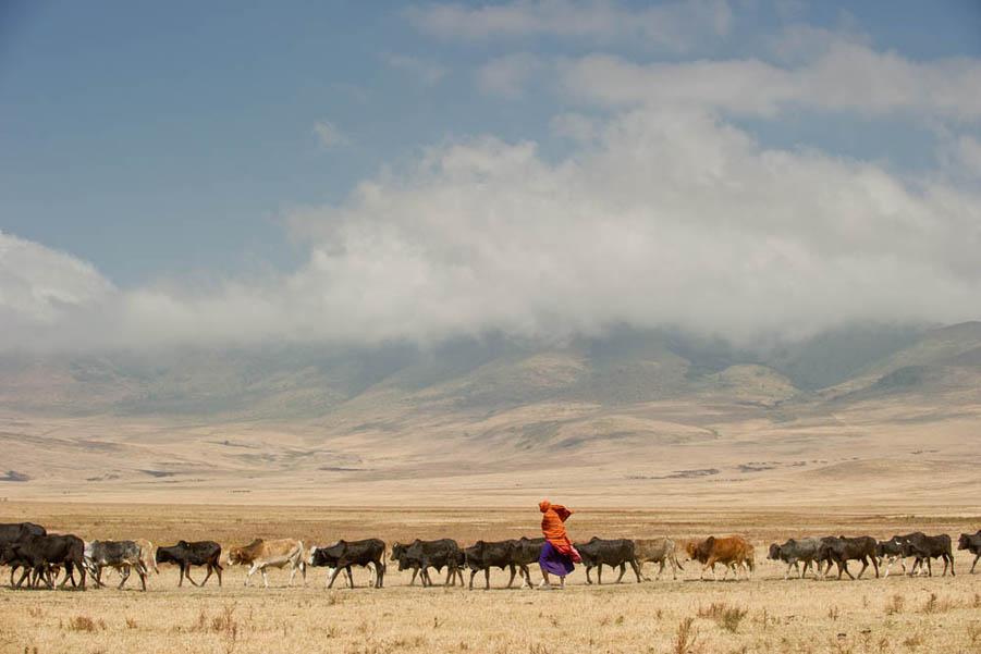 A Simple Life (Tanzania, 2012)