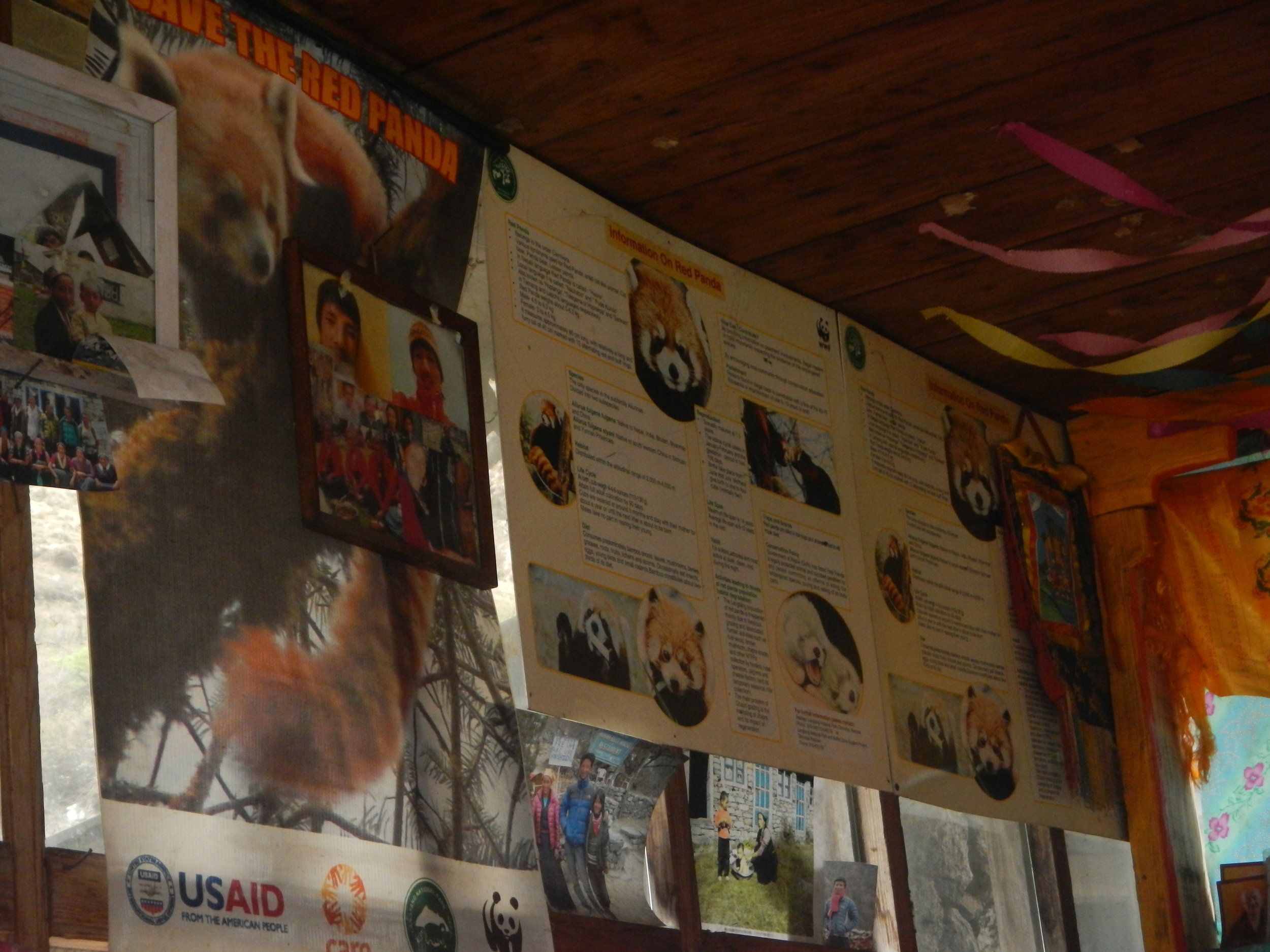 Red panda informational posters at the tea house.