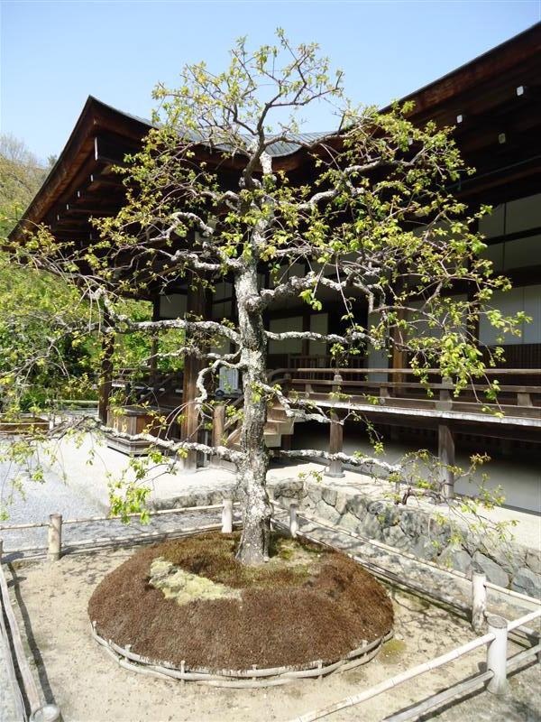 kyoto park.jpeg