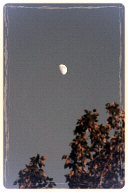 moon over poplars