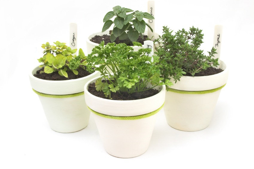 potted-herbs.jpg