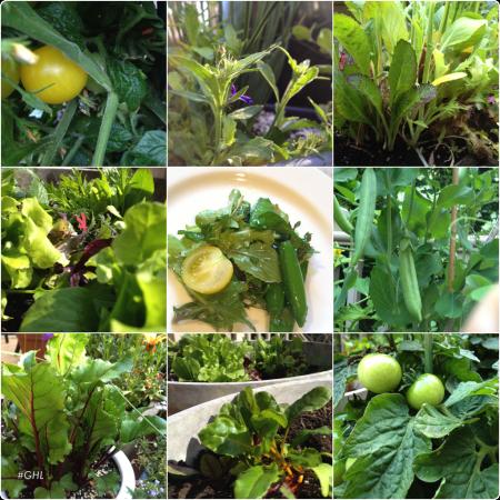 Spring Veggies 9 pic .png