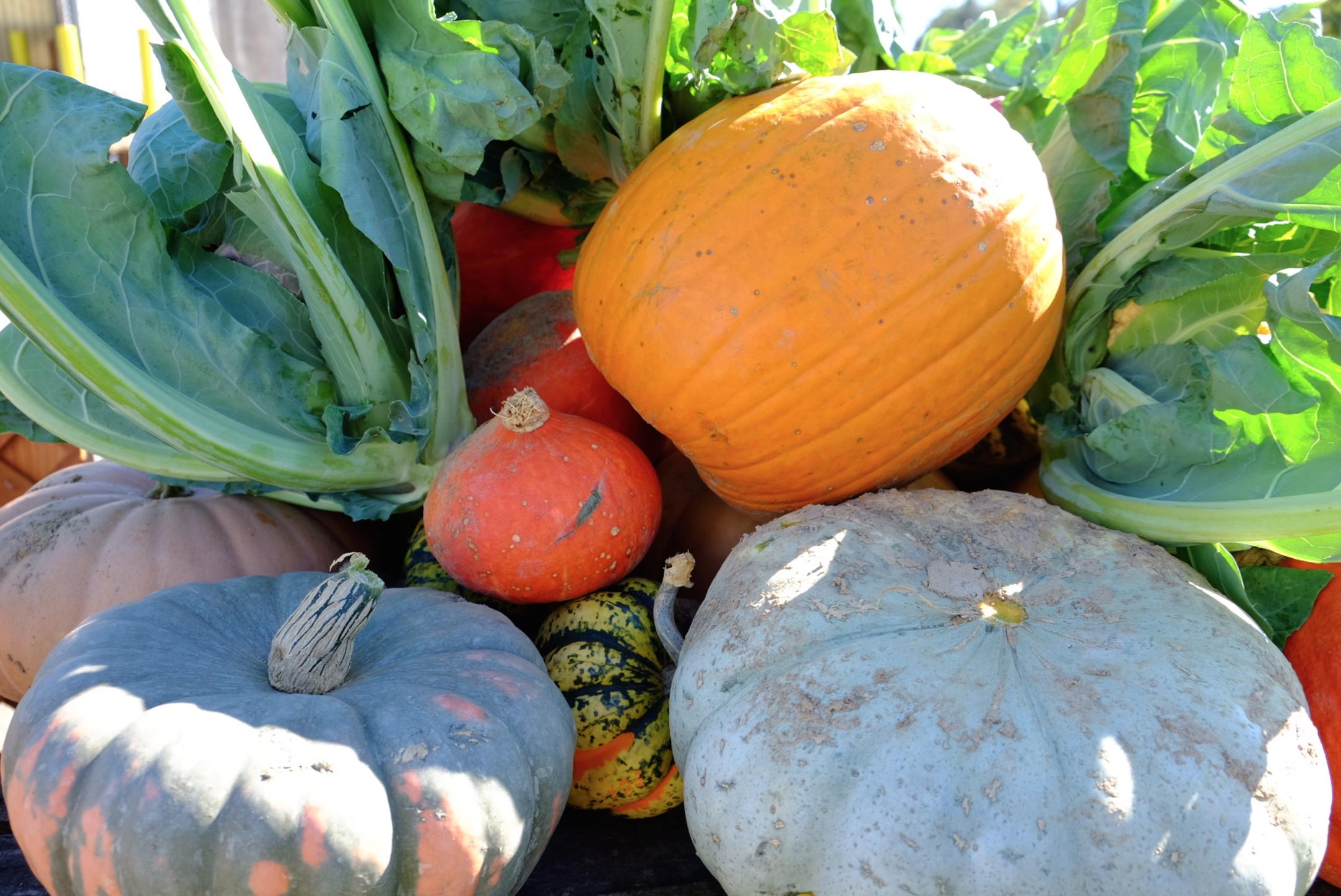 fresh pumpkin GHL