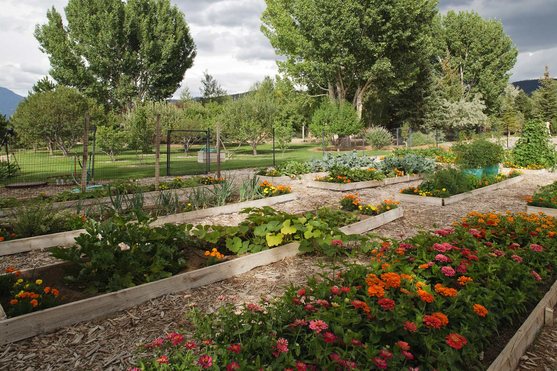 vegetable-garden.jpg