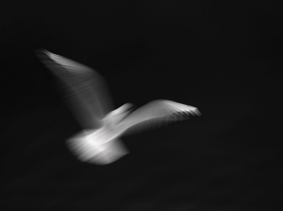 Vivienne Beck - Seagulls