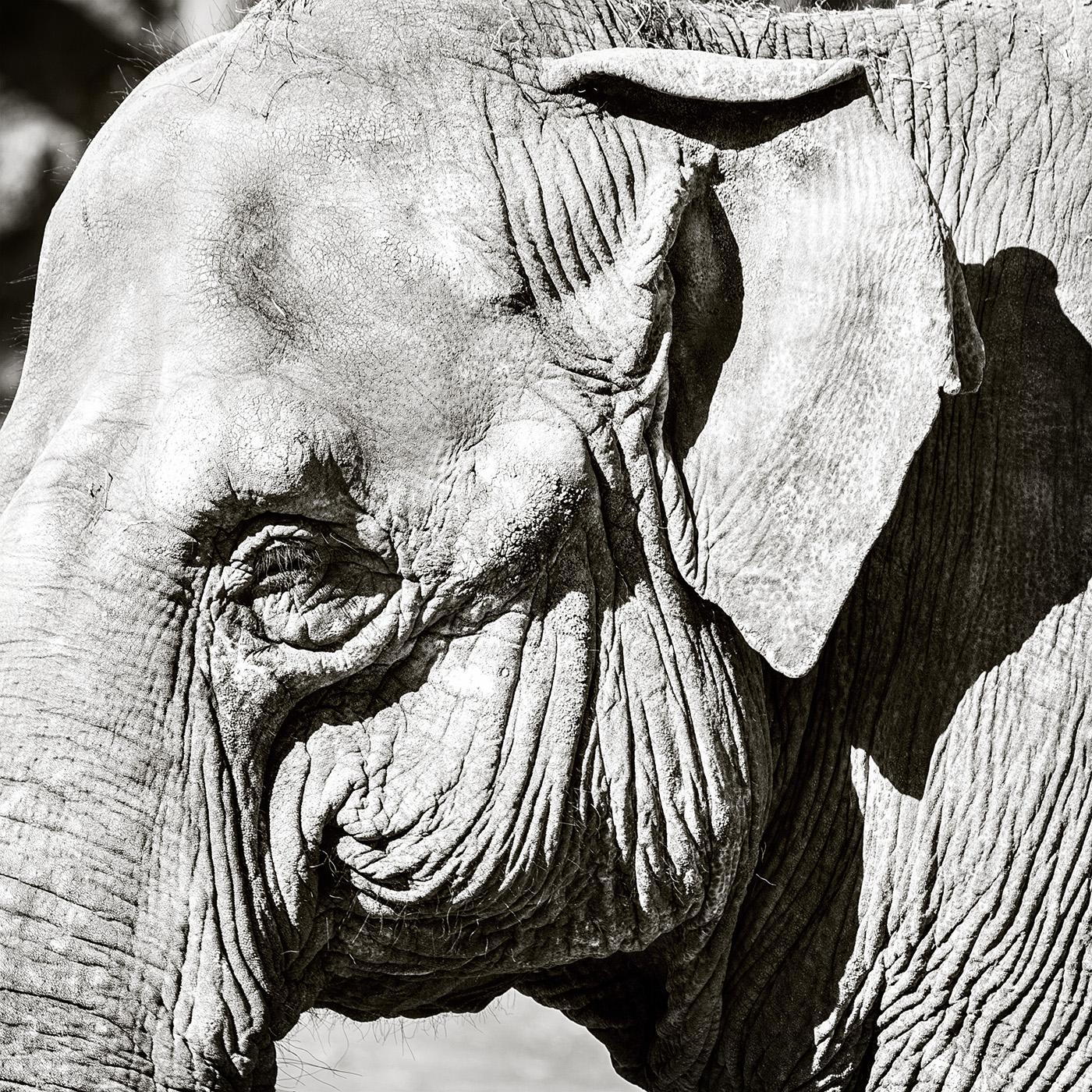 Jul 13 - Belfast Zoo