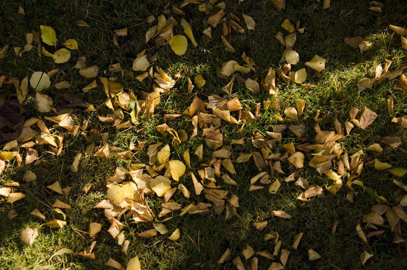 Leaves_Paul McComick_B.jpg