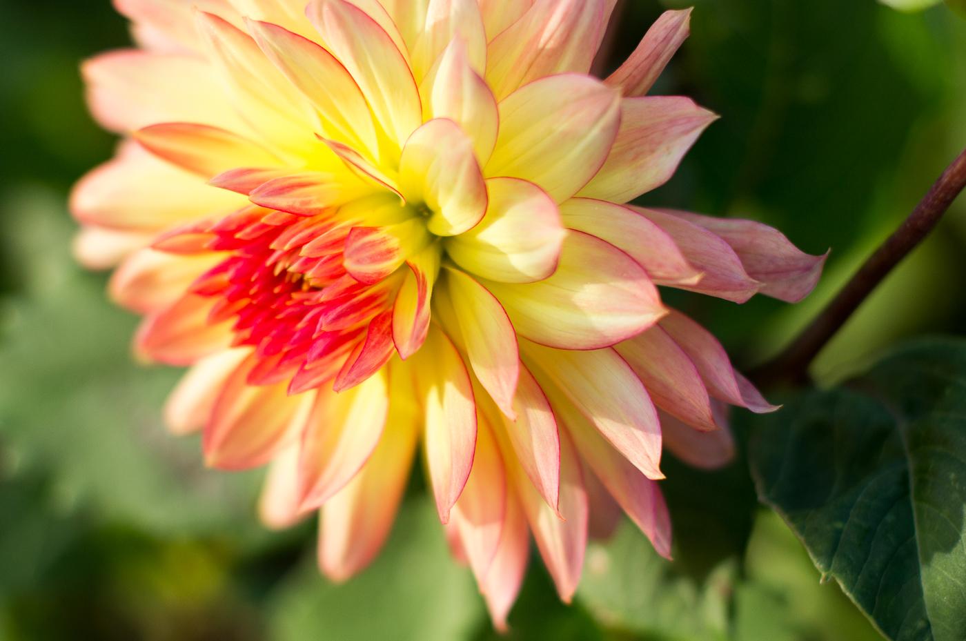 AutumnMorningFlower_IainMcDowell_BPIC.jpg