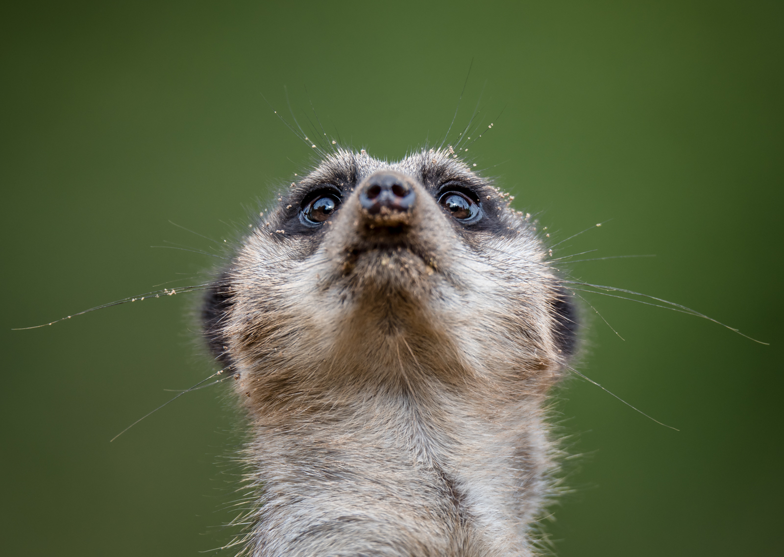 Look Up by Gareth O'Cathain