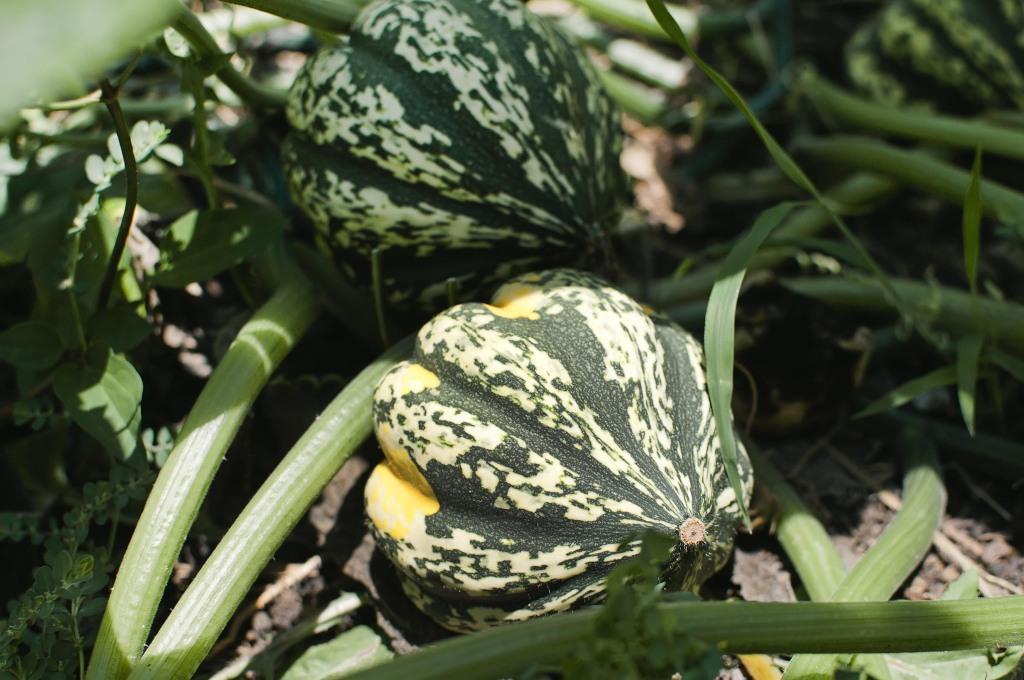 ContentImage-746-97321-farms2012185.jpg