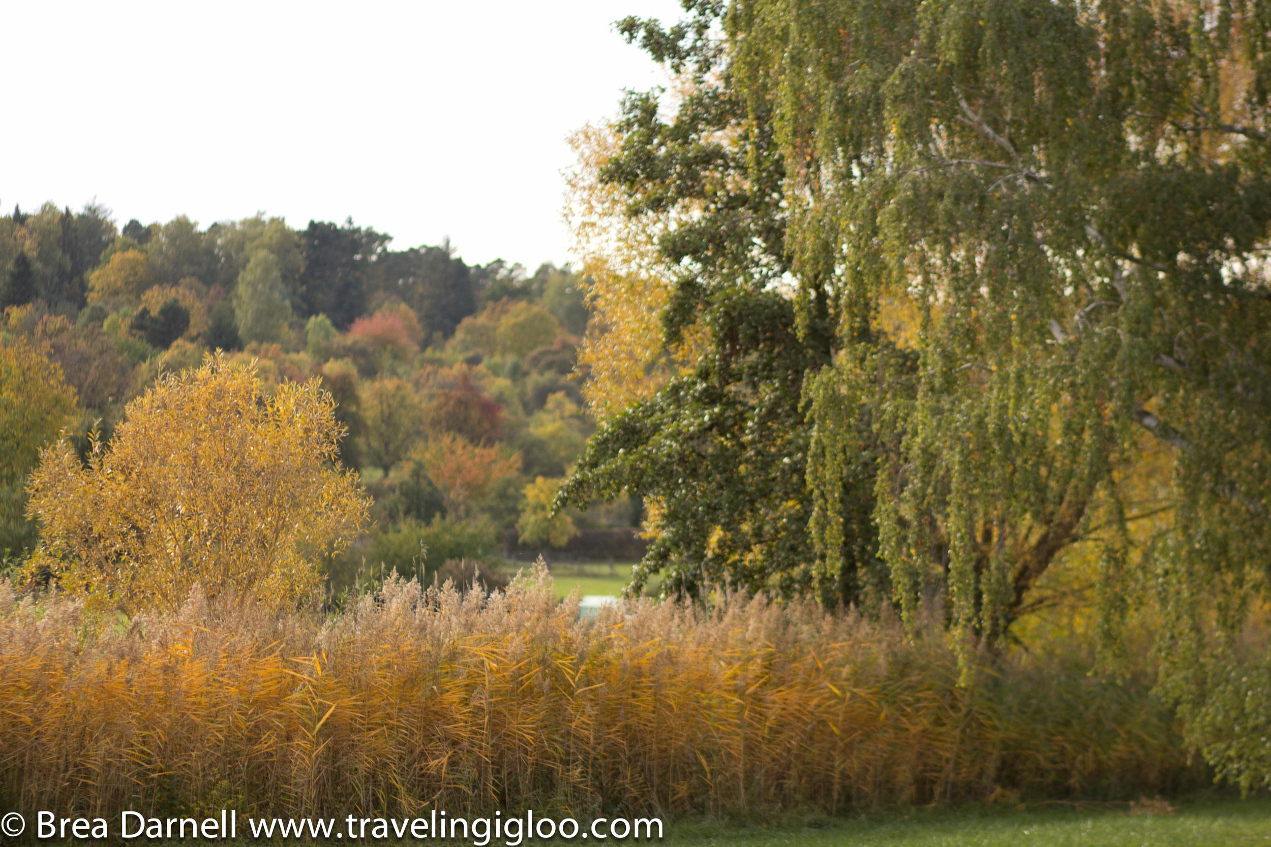 Fall-Colors-2012-20121017108.jpg