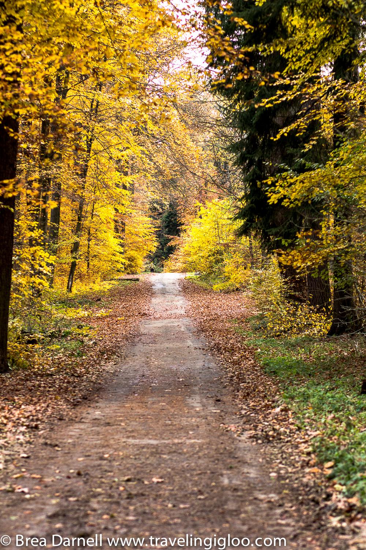 EDITED-LaurenModel-11-2012-201211072726.jpg