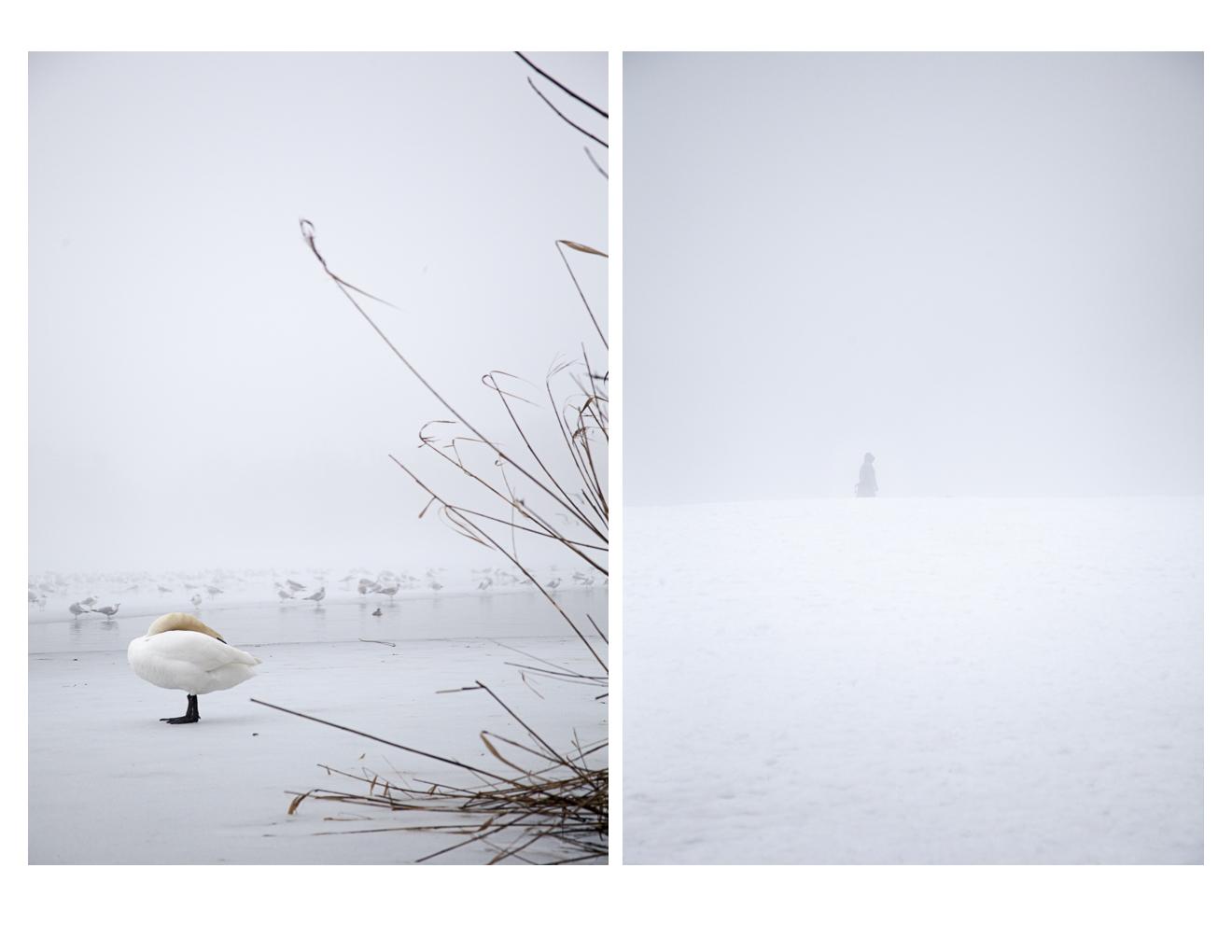 fogcity-2.jpg
