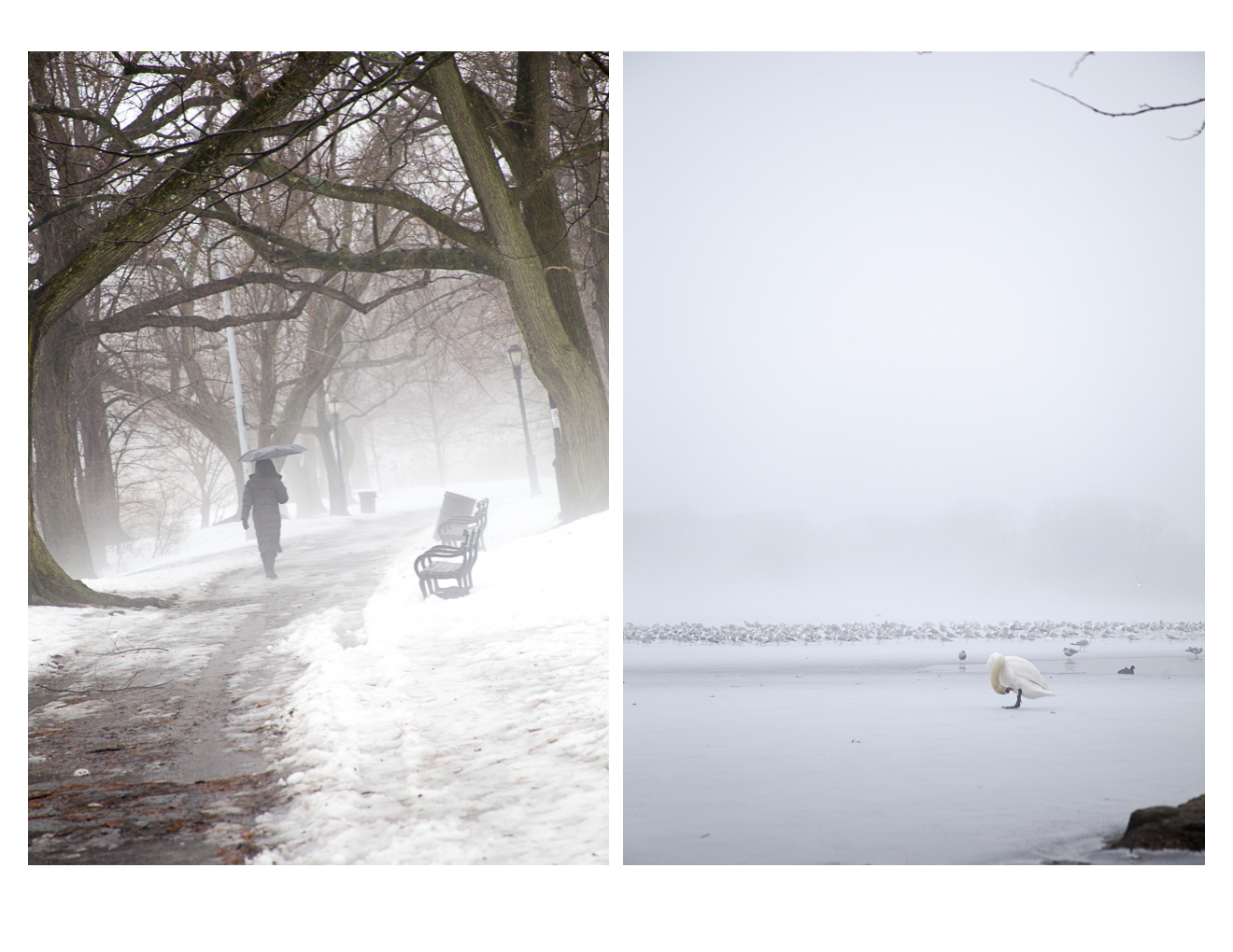 fogcity-3.jpg