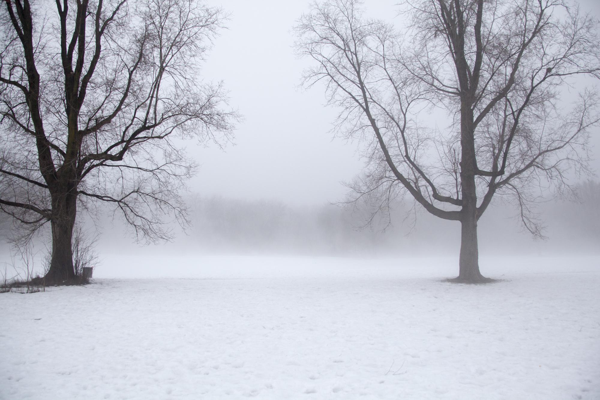 fogcity-3 2.jpg