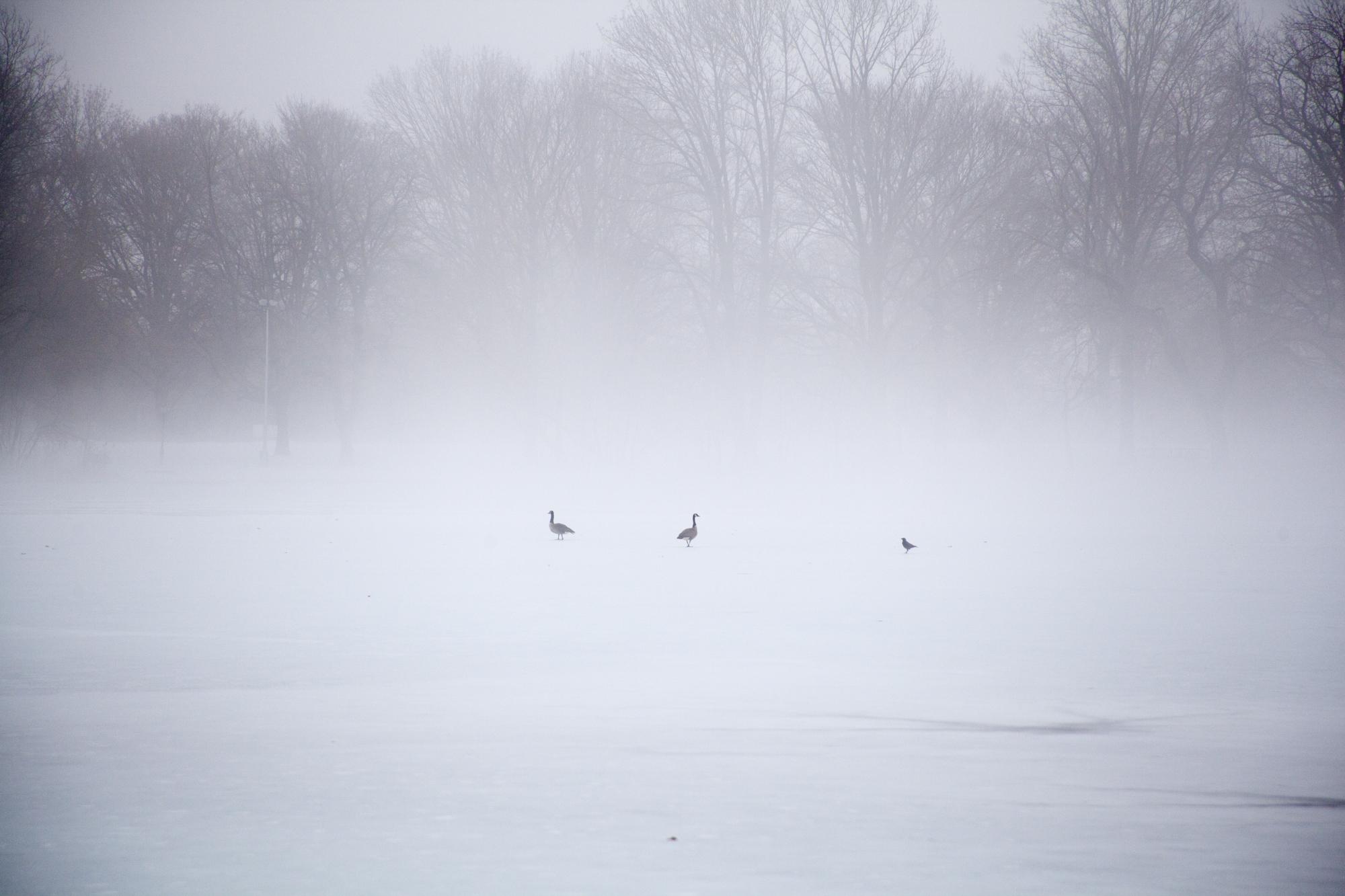 fogcity-5.jpg