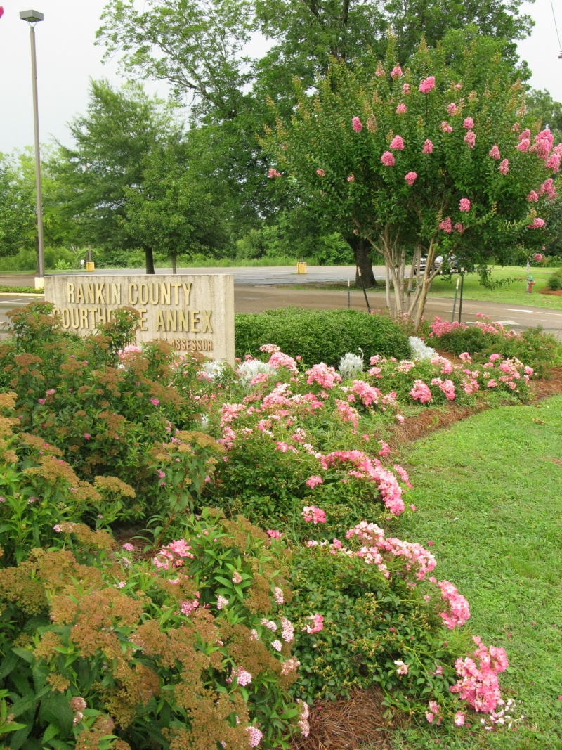 Plant It Pink flower bed at the Rankin County Courthouse Annex in downtown Brandon, MS.