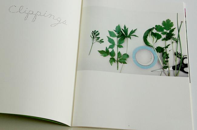 journalof plants - maria.jpg