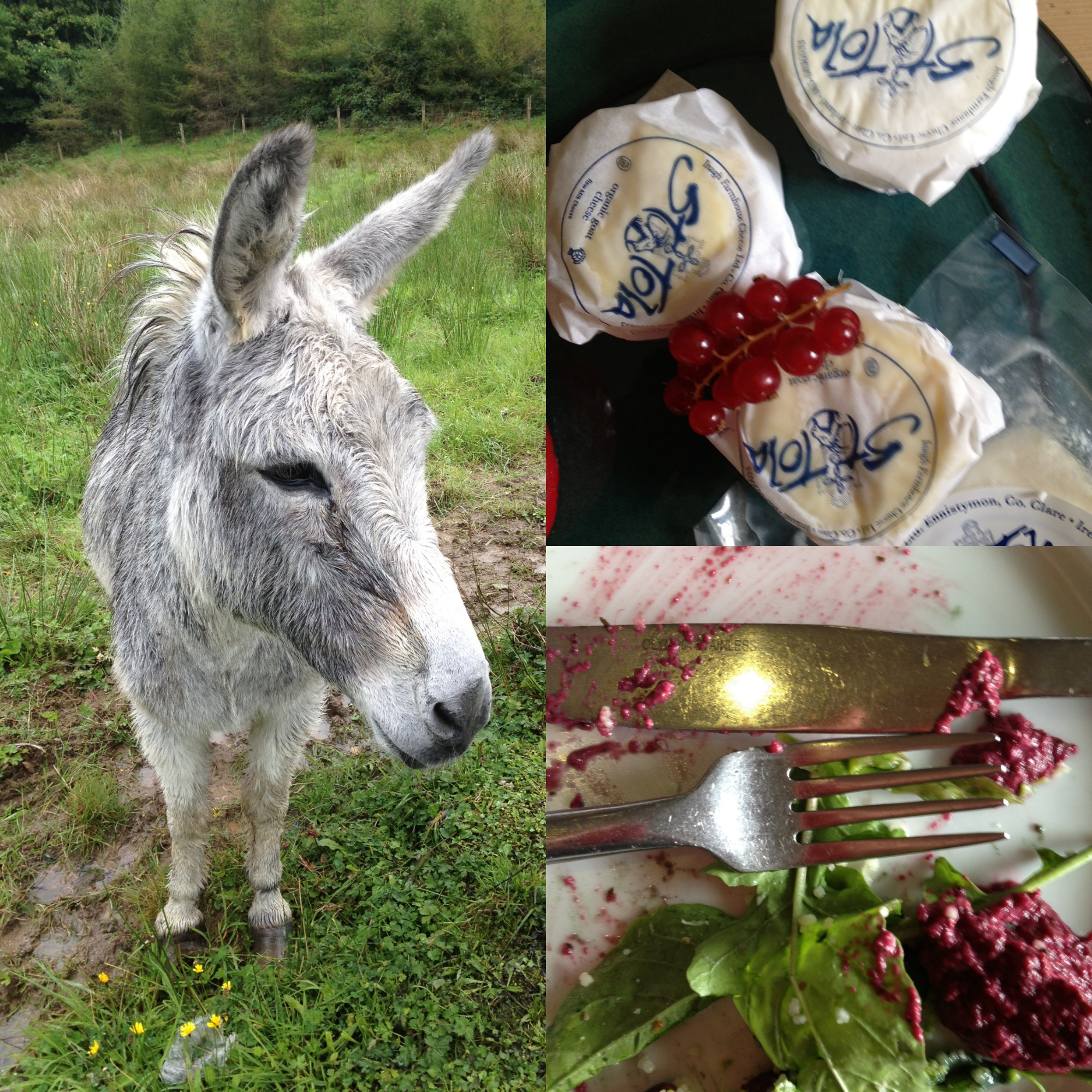 left: a donkey who wandered on the property, top right: at St. Tola's Organic Goat cheese farm, bottom right: our lunch.