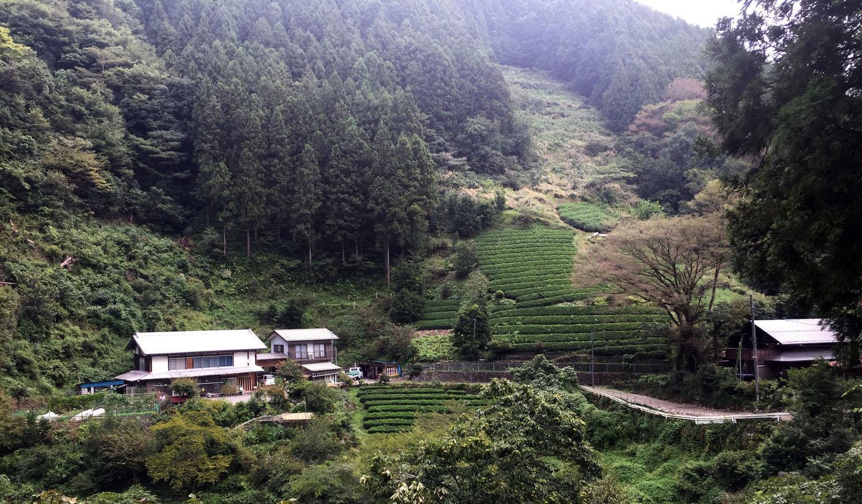 Indigo Shibori Workshop Jujino Japan Trip 2019