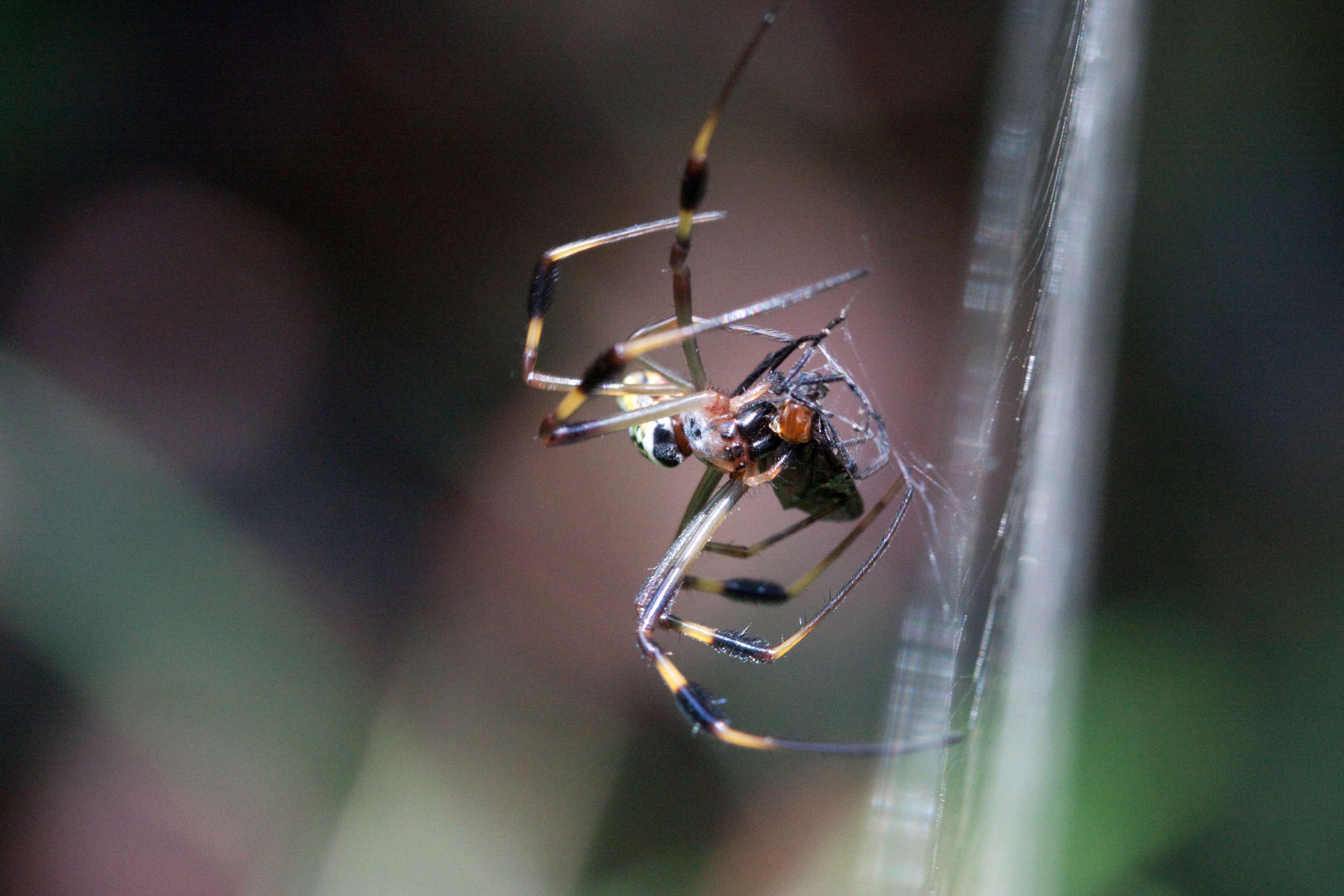 Feeding Spider.jpg