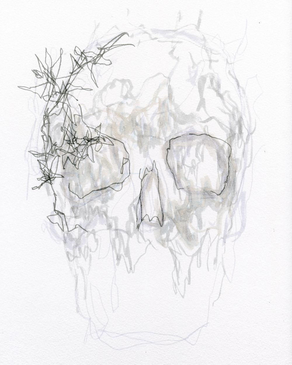 skull001.jpg