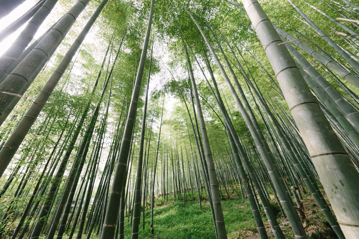 pketron arashiyama 1