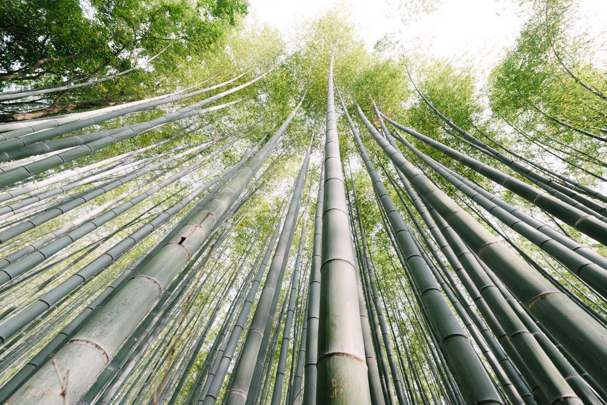 pketron arashiyama 2