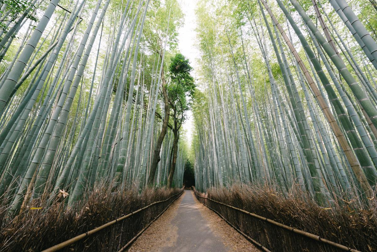 pketron arashiyama 4
