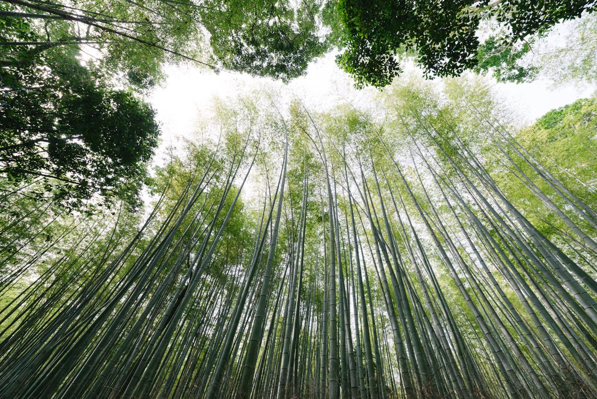 pketron arashiyama 6