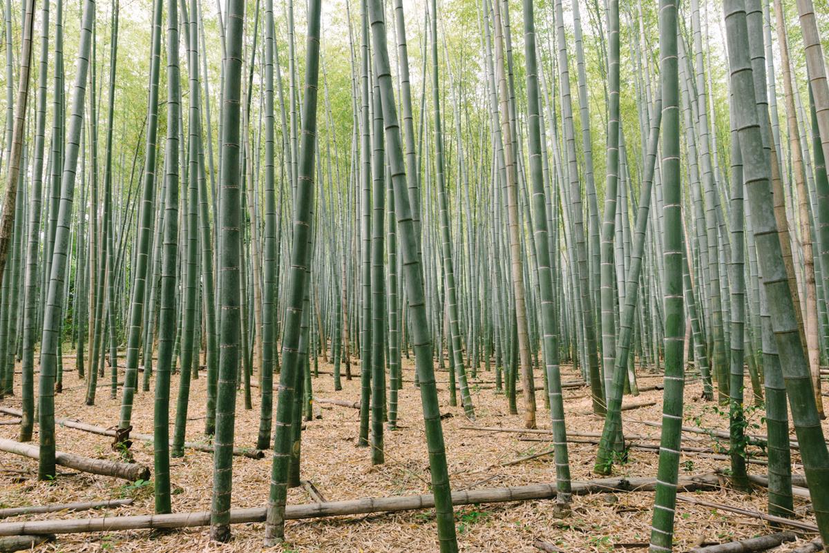 pketron arashiyama 7
