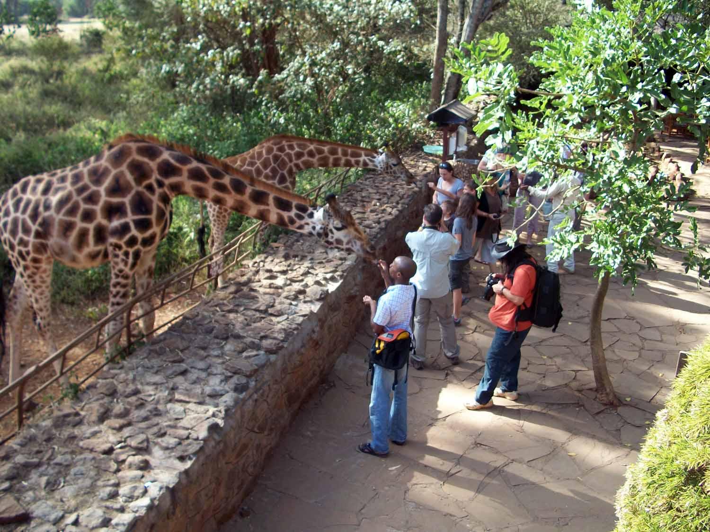 Giraffefeed2.jpg