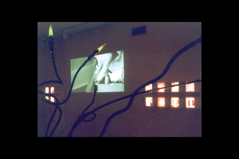 iNSIDE>OUTSIDE (installation view/Parthenon Museum, Nashville, TN), DDDD, 2000. In background, lightboxes by PJM and projection video by Brent Stewart.