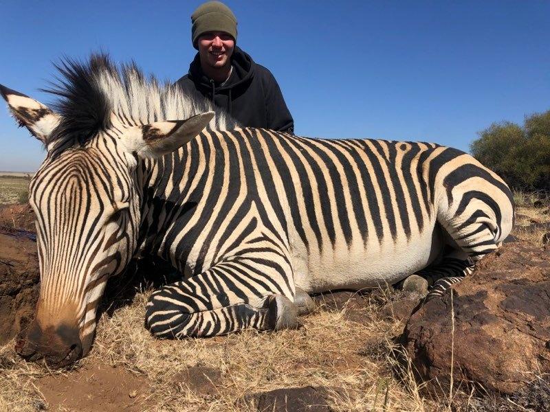 Trace Greene Zebra