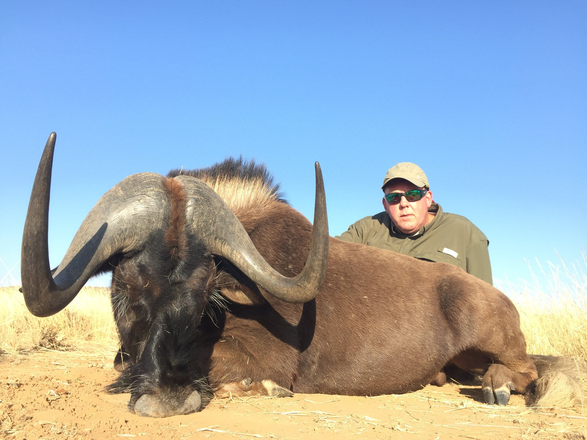 Kerry Hall Black Wildebeest
