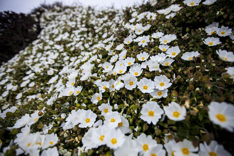 MarianneBrownPhotographyCohabitateCoGreenCalifornia12.jpg