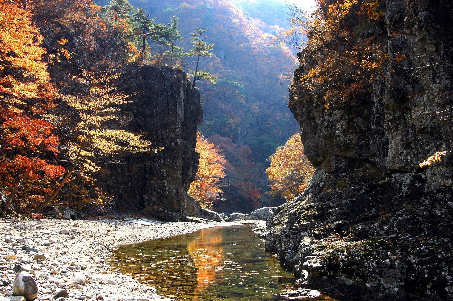 nature-527834_1920.jpg