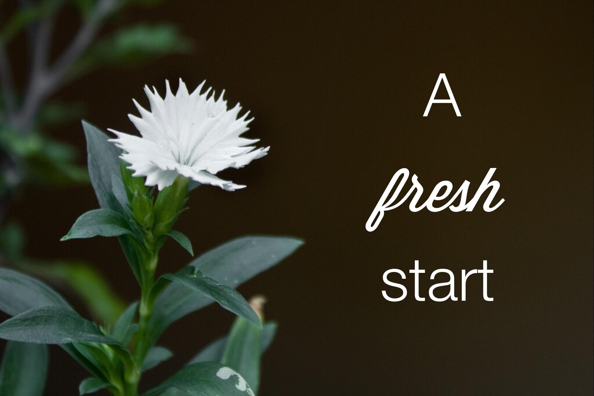 freshstartflower.jpg
