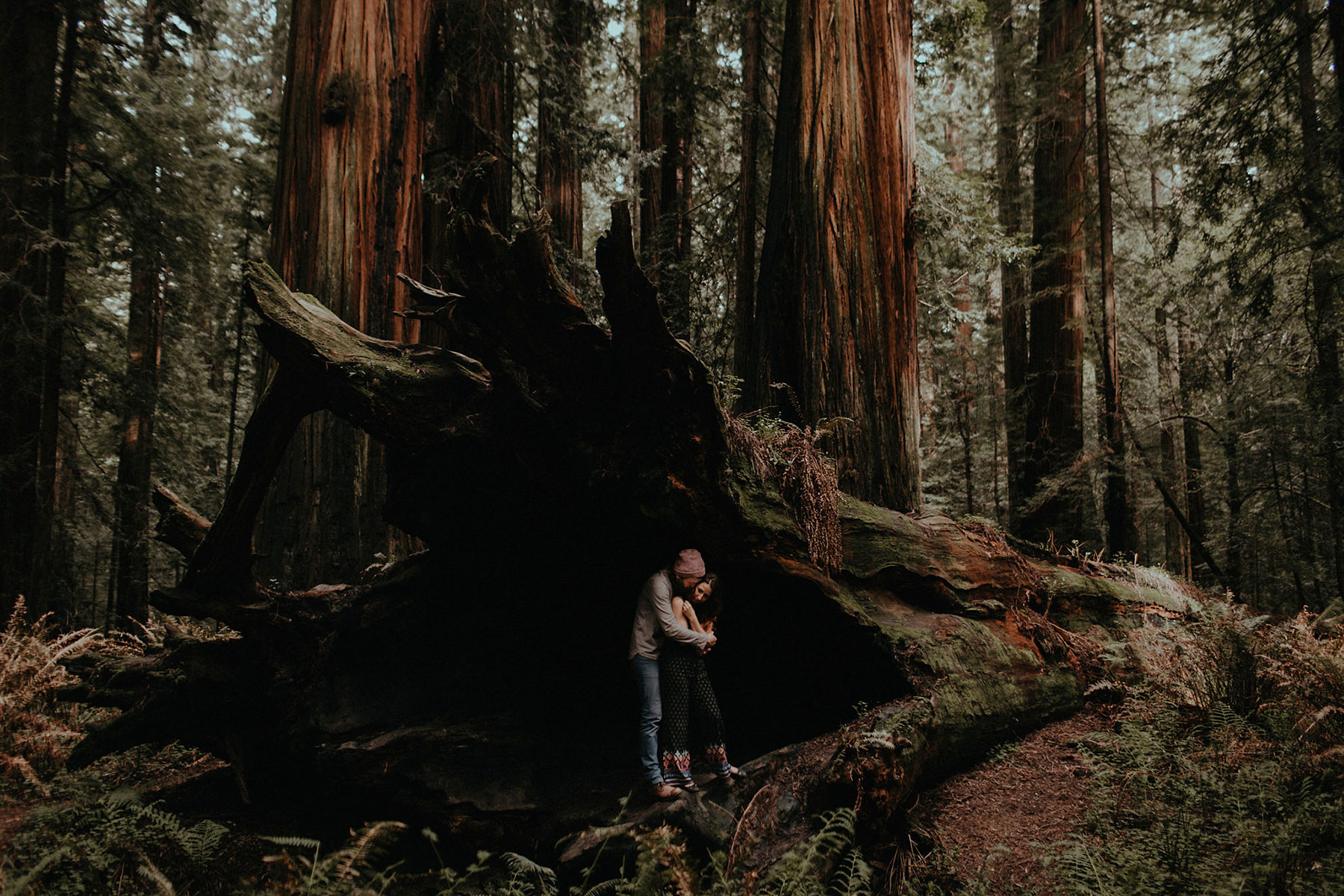 redwoods engagement