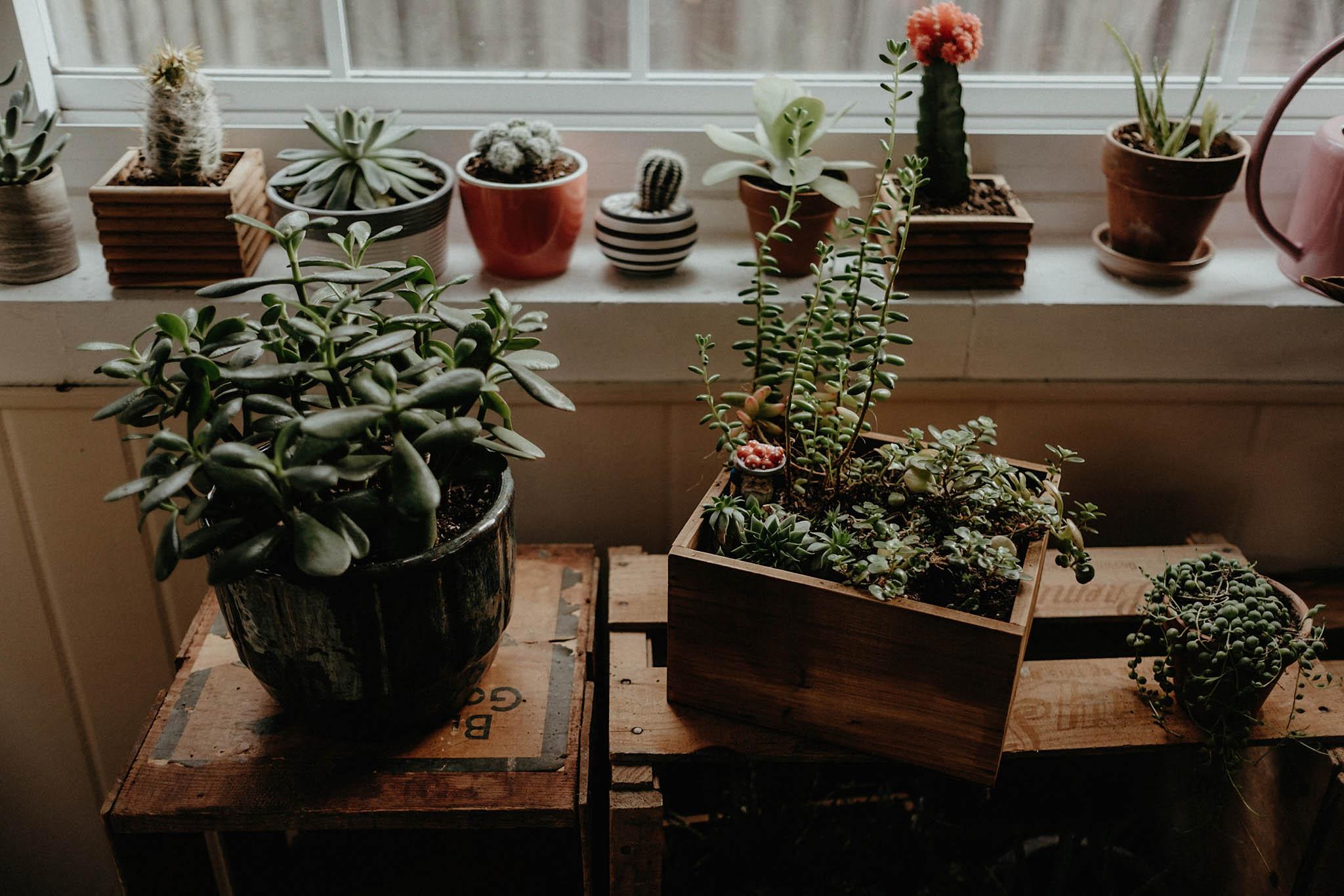 cincinnati warehouse wedding house plants