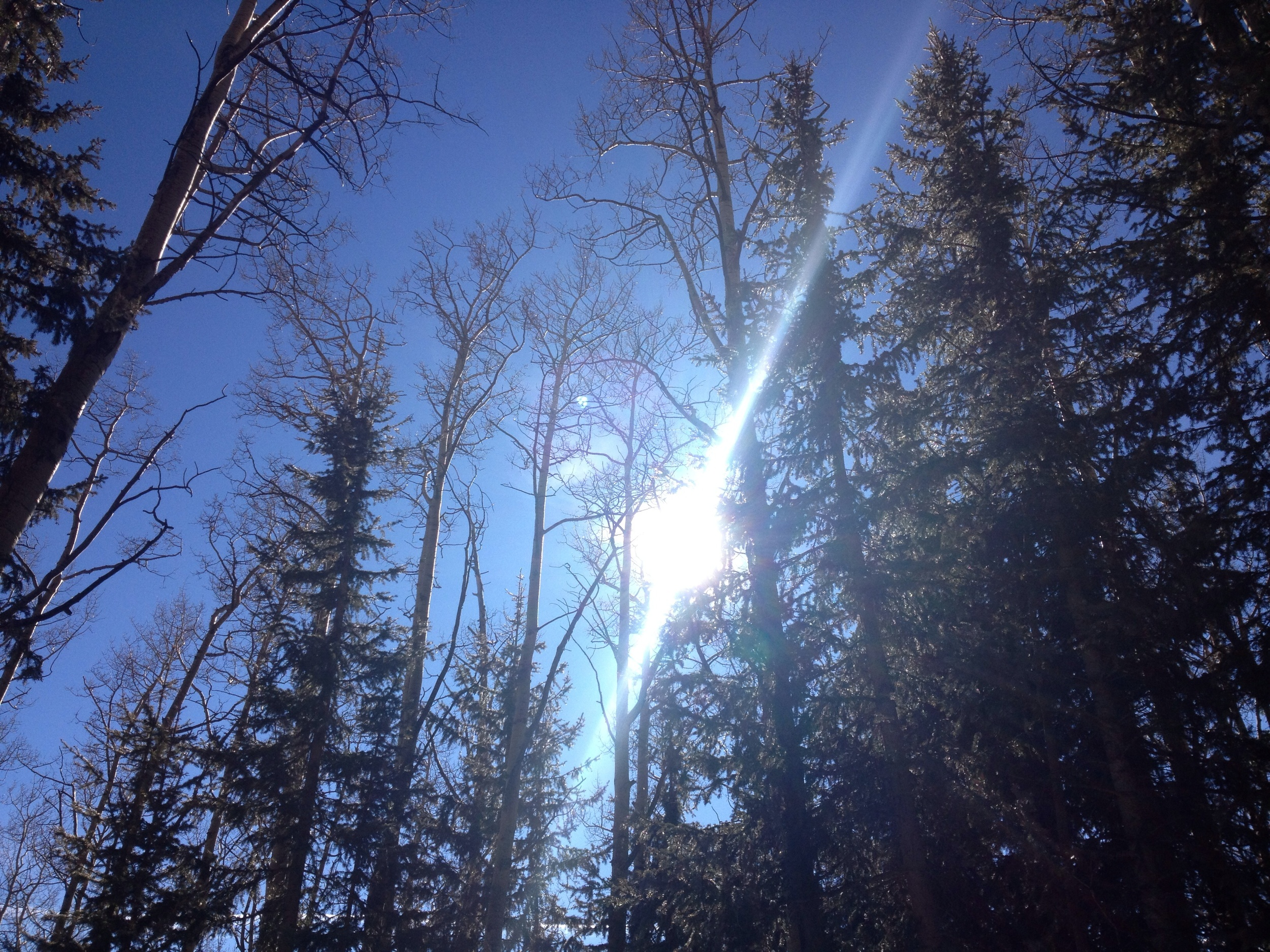 On Windsor Trail near Santa Fe ski slope...