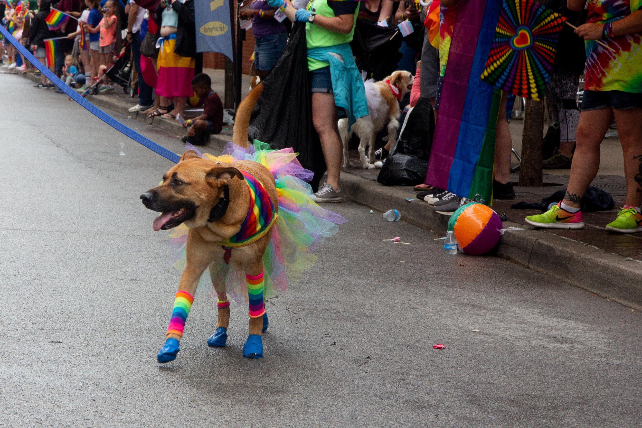 CaseyMillerPhoto - Pride - 2019 -141.jpg