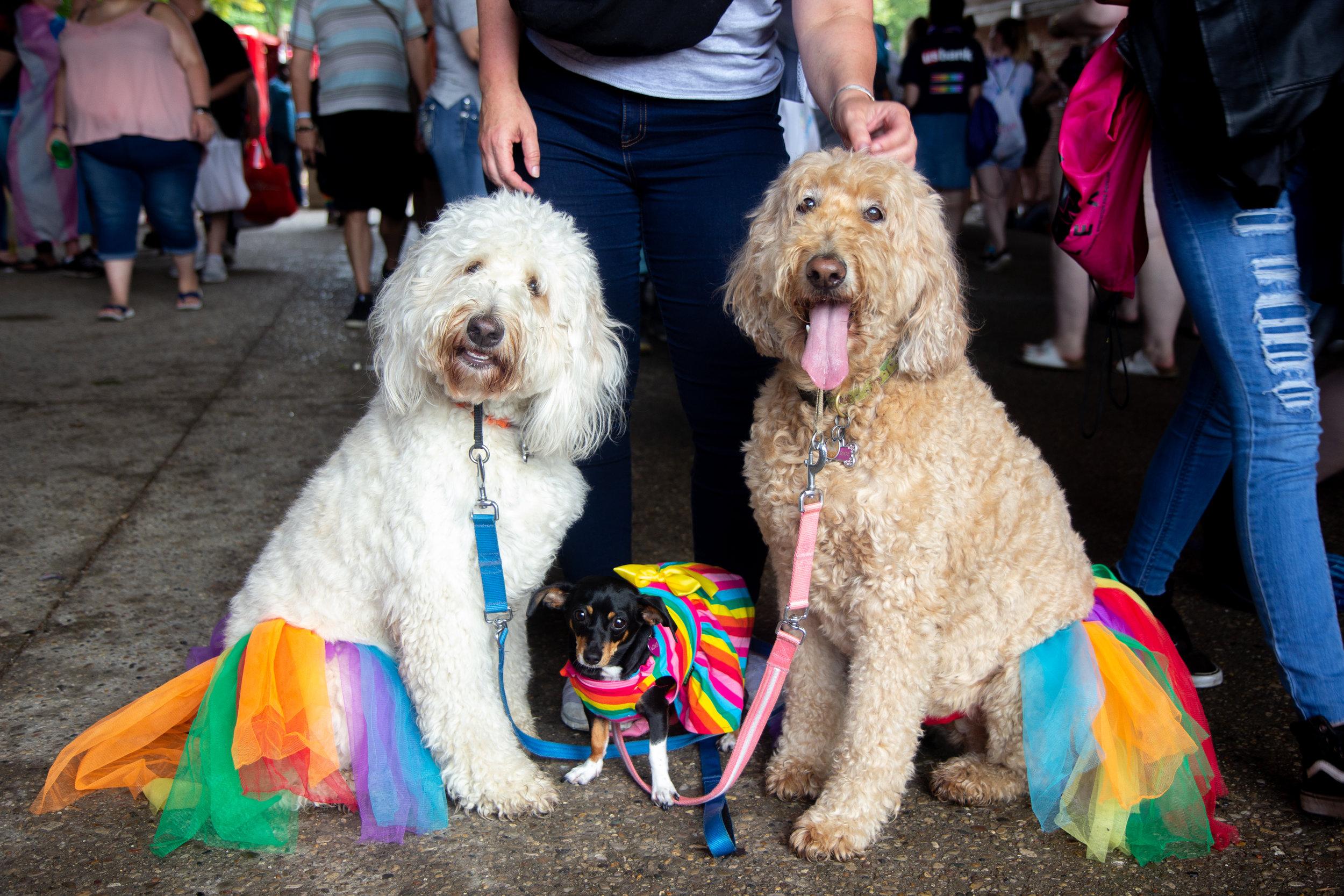 CaseyMillerPhoto - Pride - 2019 -192.jpg