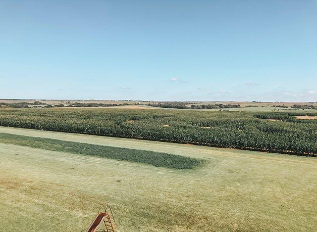 The view from above! Climb our 30ft tower and you'll get a great birds-eye view of the maze!      #pbarfarms #cornmaze #fallfun #fallfamilyfun #funonthefarm #oklahoma #oklahomafarm #getlostinthefun