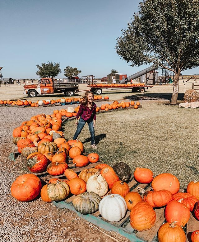 Need pumpkins? We got them! Our pumpkin patch is full of mystic pie pumpkins and we've got a variety of pumpkins by our Country Store that are .50 cents a pound!