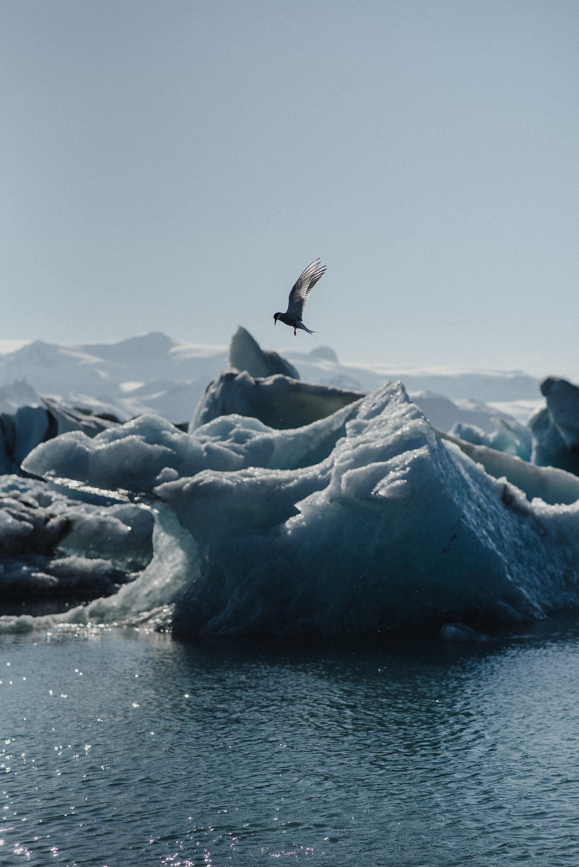 Adventurous Iceland glacier wedding