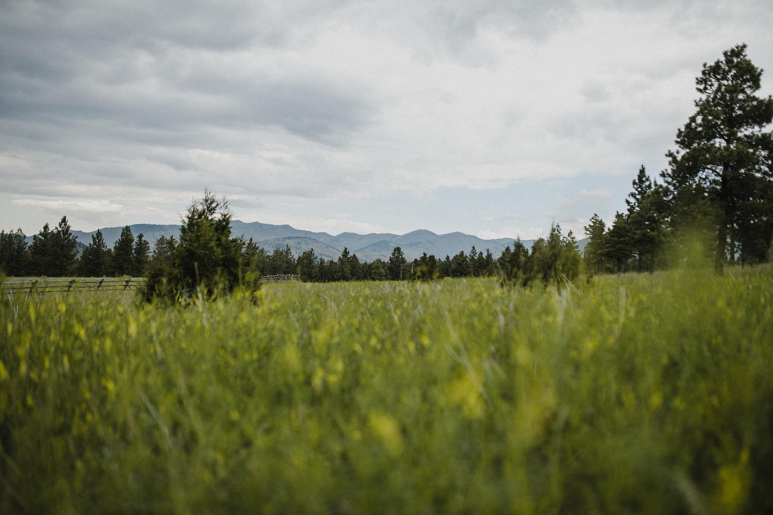 Gorgeous destination wedding in Montana